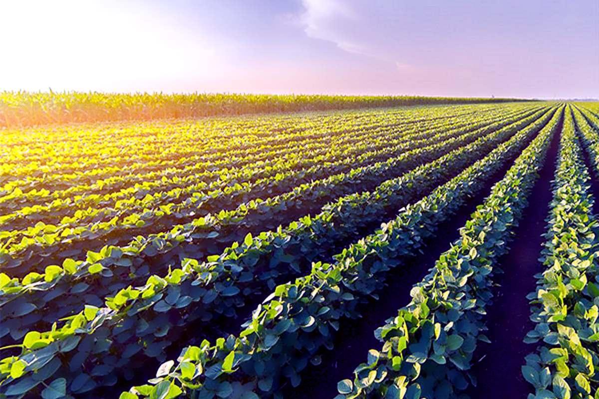Agricoltori in arrivo 700.000 €uro!