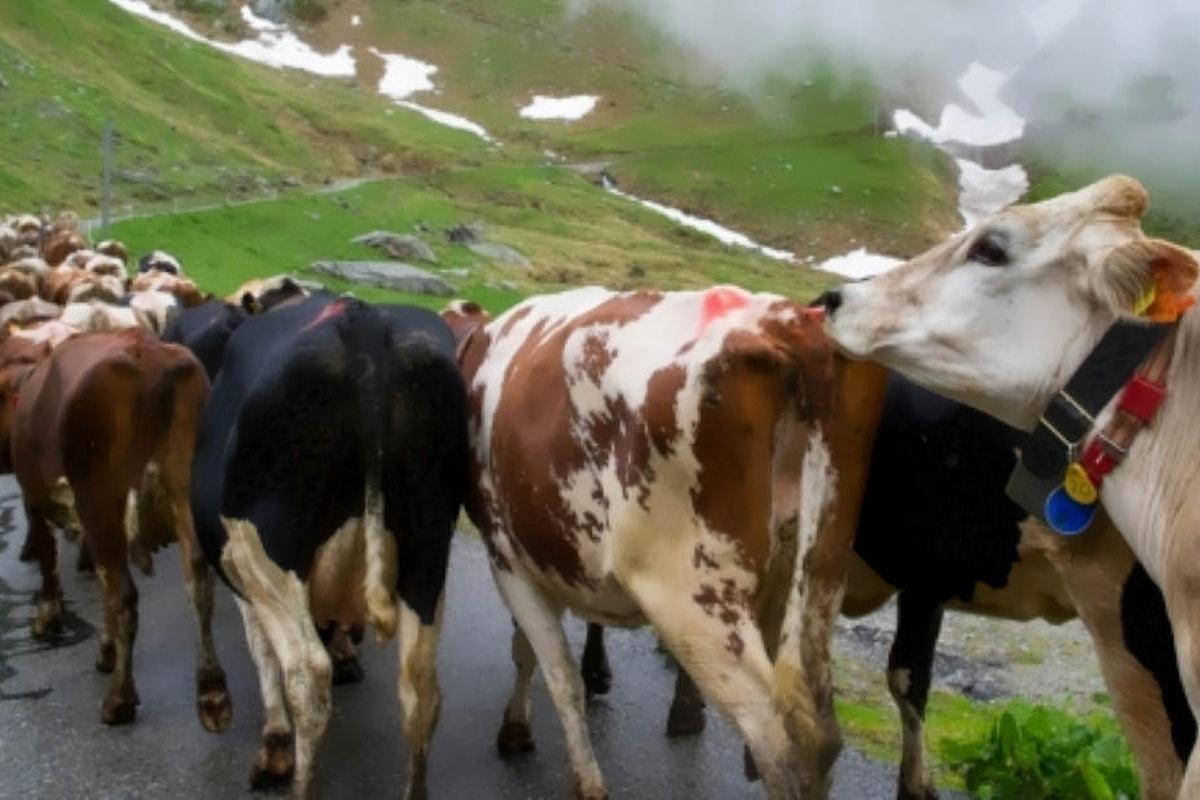 Salvini e Renzi annunciano di aver ufficialmente riaperto il mercato delle vacche
