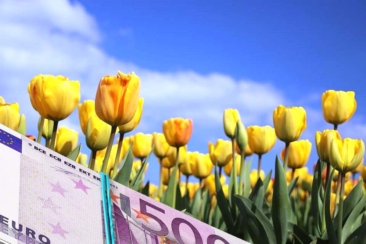 Tulipani e paradisi fiscali