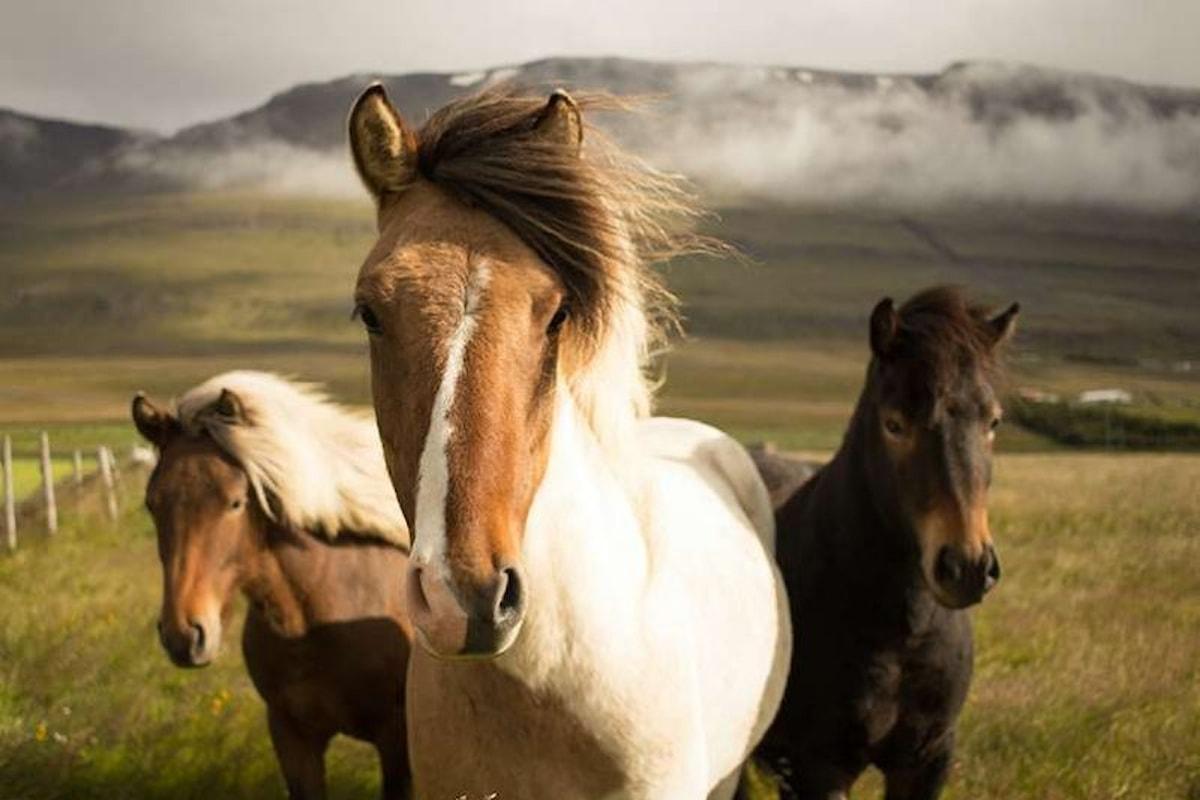 Il Ranch che cura l'omosessualità con i cavalli chiuderà definitivamente