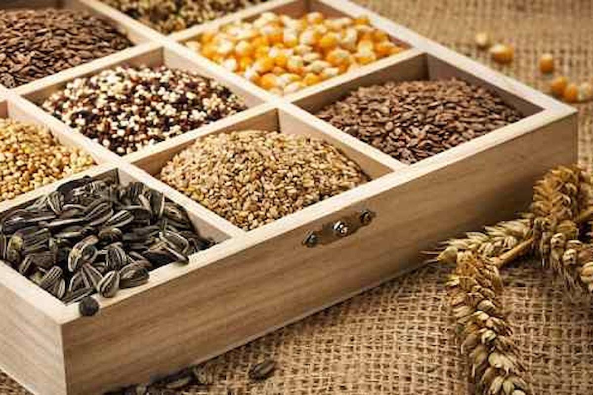 Prodotti agricole e quotazioni, lieve rialzo per soia e mais