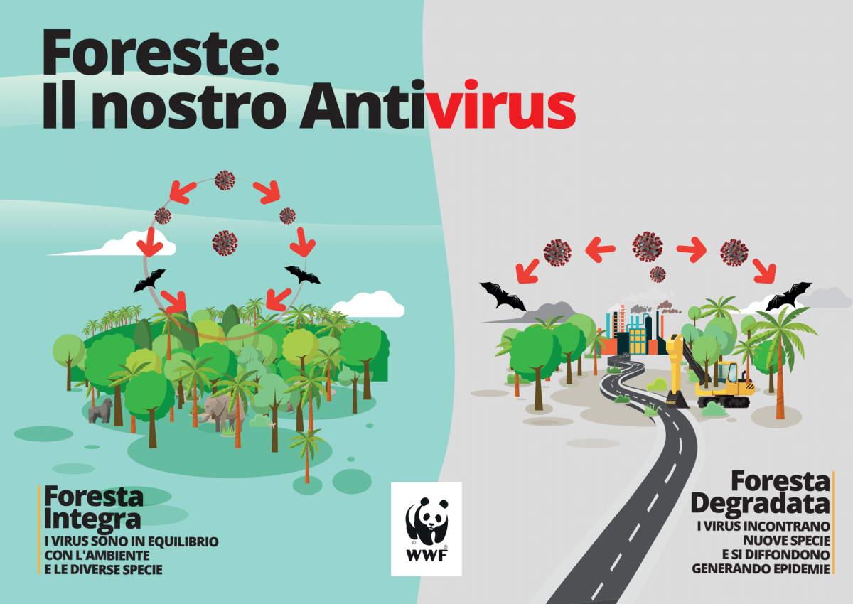 Covid. WWF: la tutela della natura è la migliore garanzia per la tutela della nostra salute