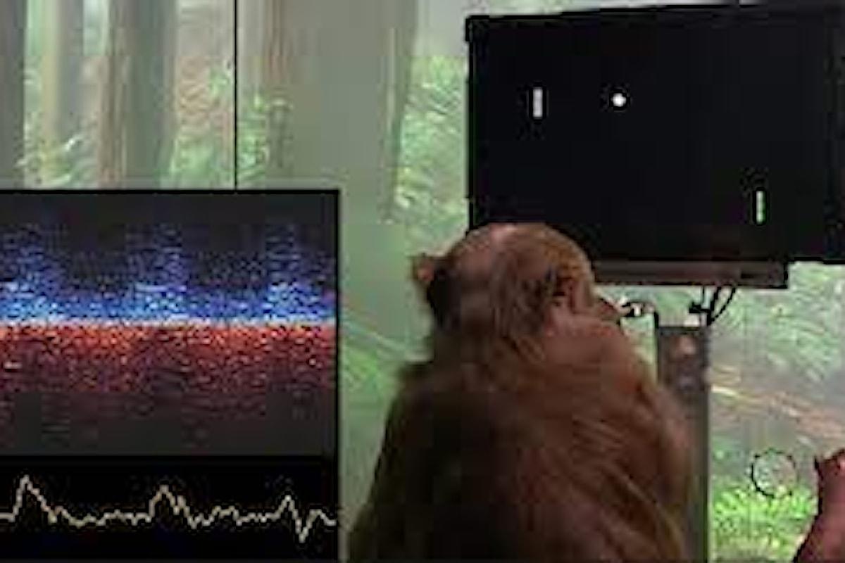 Il sogno di Elon Mush: applicare l'elettronica al cervello dell'uomo