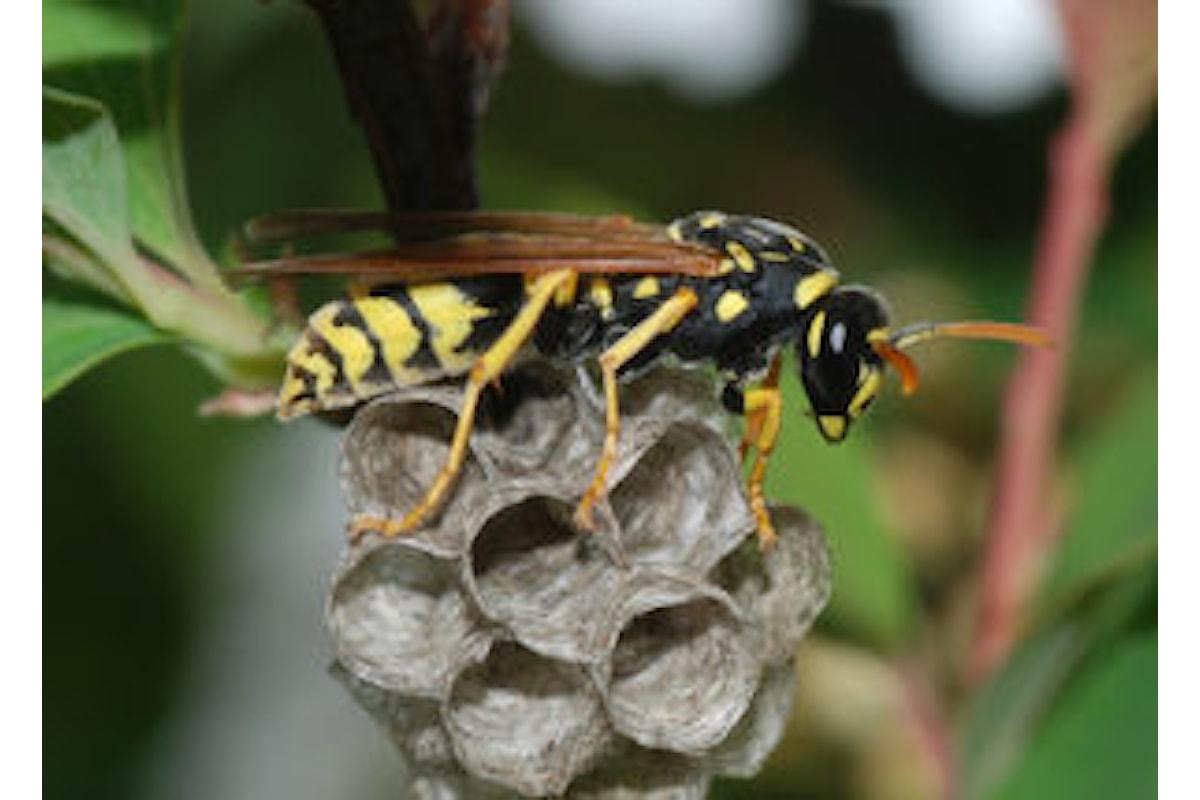 Come eliminare vespe e calabroni