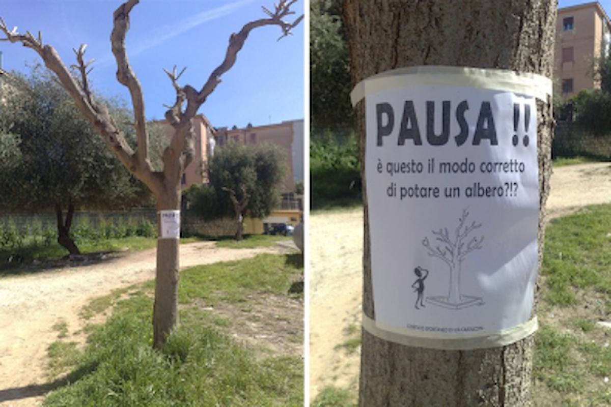 Nasce a Treviso la carta dei diritti del verde che tutelerà gli alberi