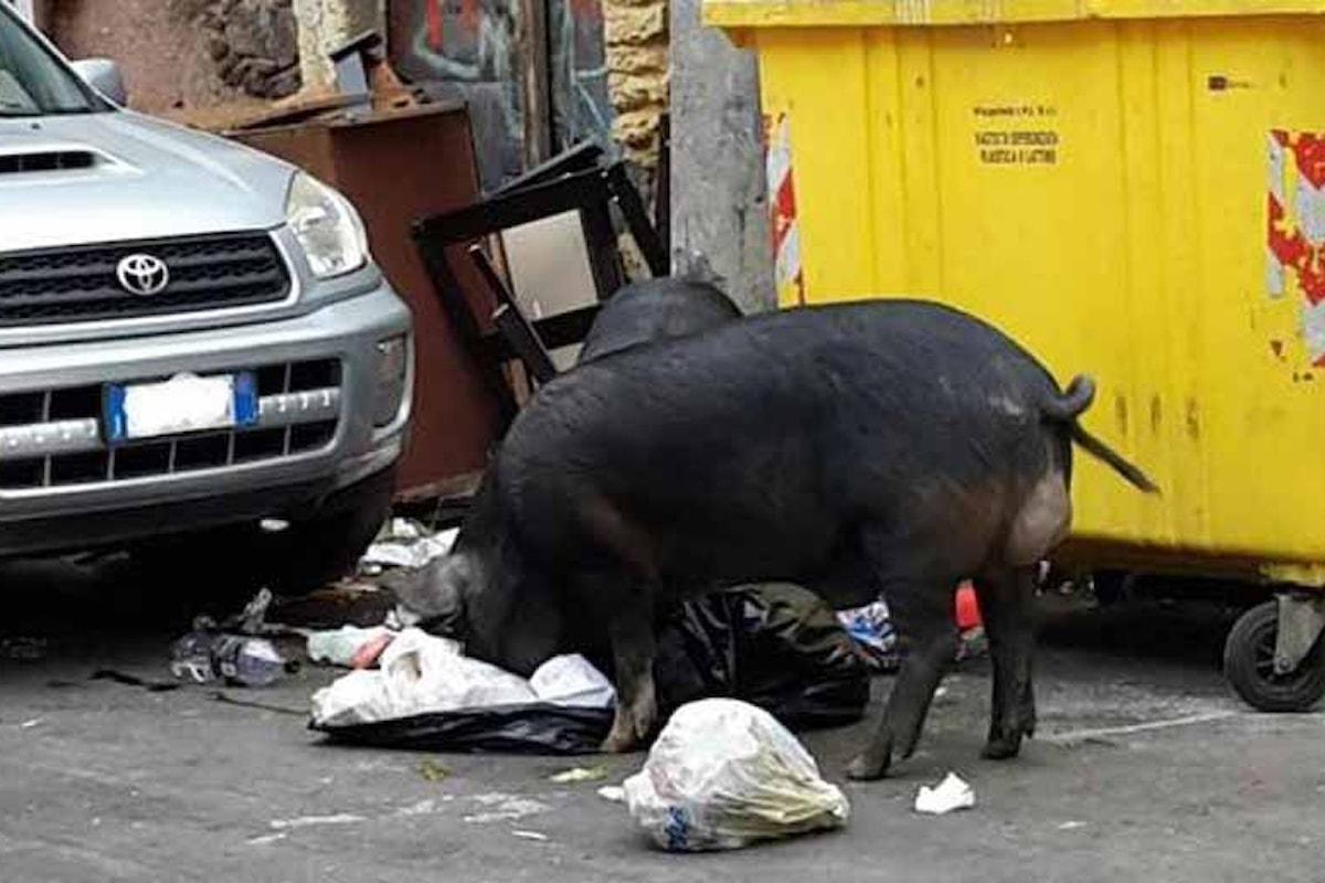 Catania, clochard aveva allestito una fattoria abusiva. La polizia procede allo sgombero