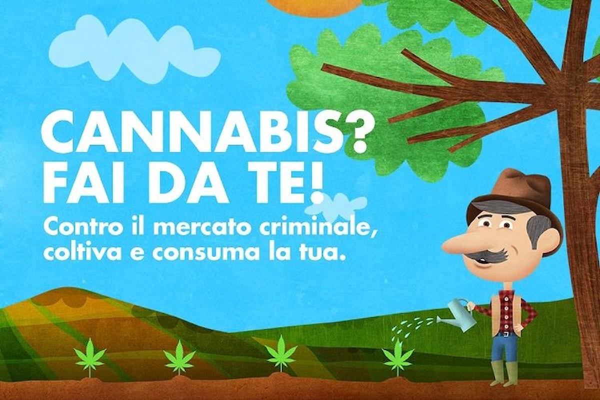 20 aprile giornata mondiale della Cannabis. A Milano se ne distribuiranno semi per la sua coltivazione